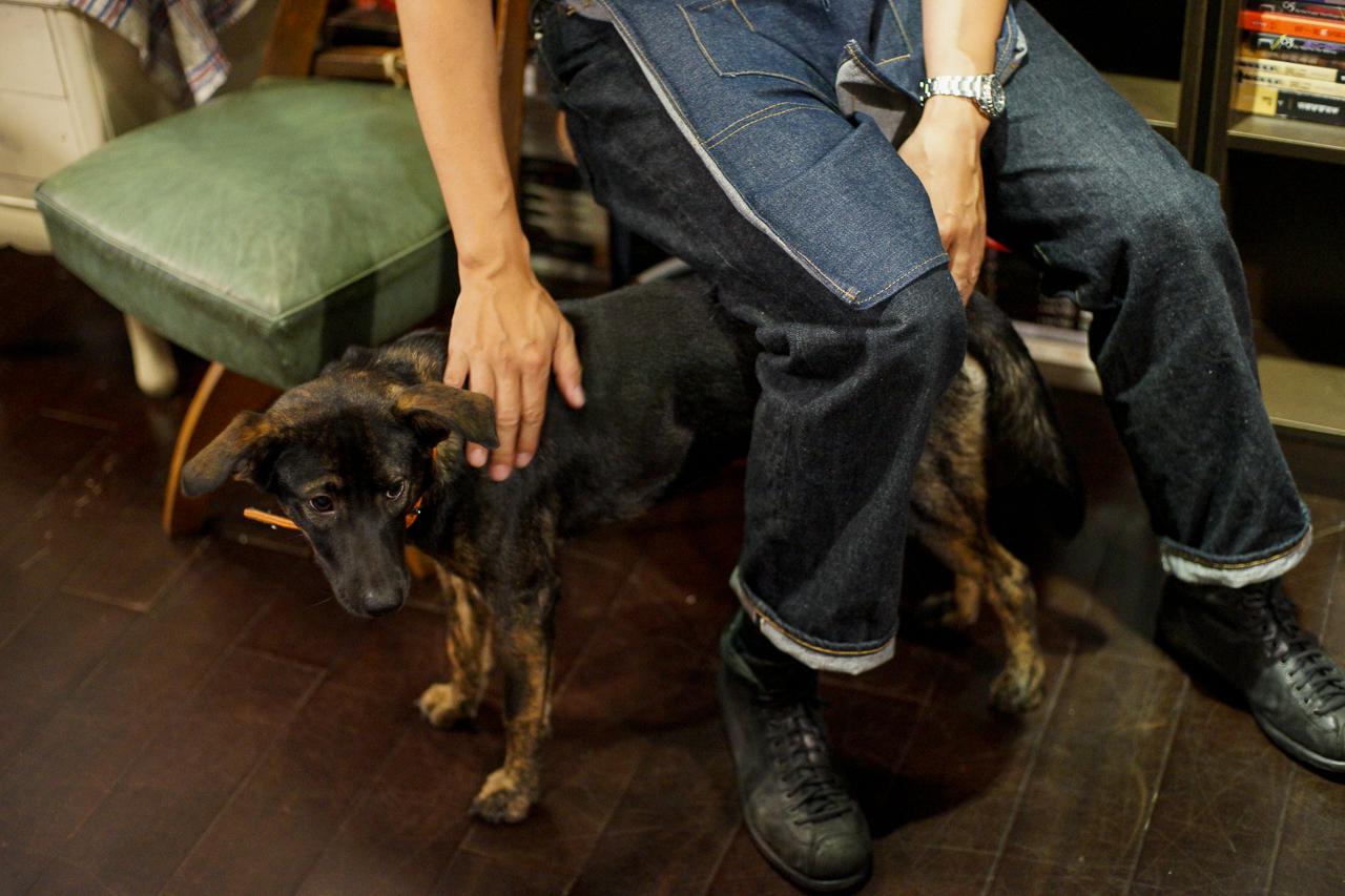 店の看板犬・アガサちゃん。捨て犬だったところを助けられて、今は偵探書屋の看板犬として接客中(とはいえ、インタビュー中は仕事の邪魔をしてはならんということで隣室に閉じ込められていたのはナイショ(爆))
